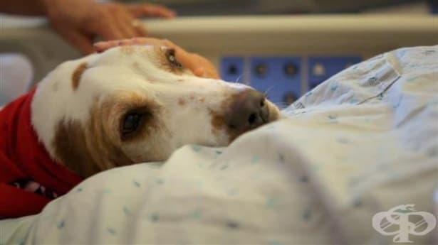 Психология на насилието над животни — беззащитните са първите жертви на насилника — част 2 - изображение