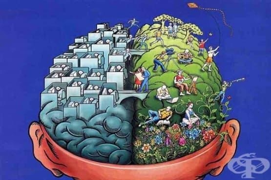 Рационален или творчески е мозъкът ви - изображение