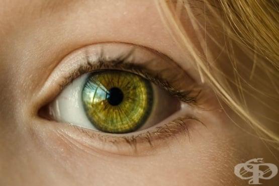 Размерът на зениците разкрива нивото на интелигентност - изображение