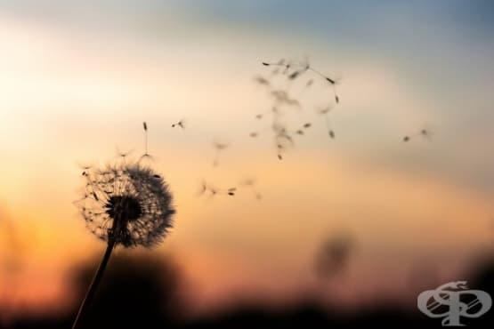 Как да пазим щастието си от избледняване - изображение
