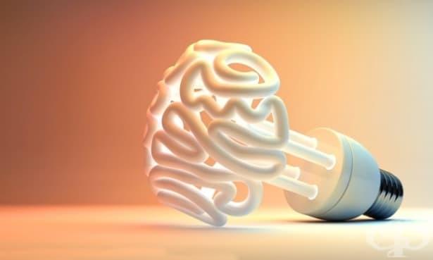 Щастието се намира в лявото полукълбо на нашия мозък - изображение