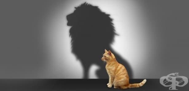 Популярни теории за самоувереността - изображение