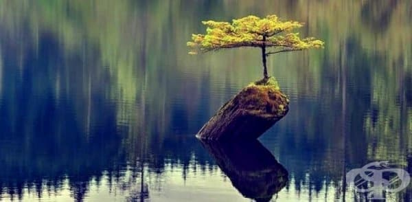 Невробиология на устойчивостта - изображение