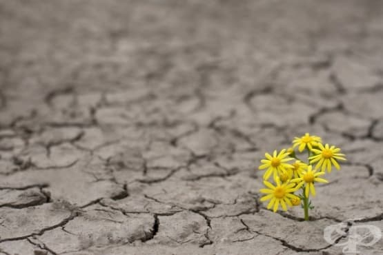 10 начина за изграждане на психическа устойчивост - изображение