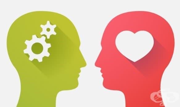 IQ или EQ: Кое е по-важно? - изображение