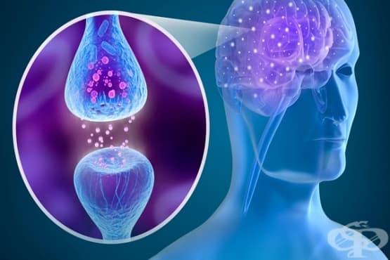 Значение на допамина за психичното състояние на индивида - изображение