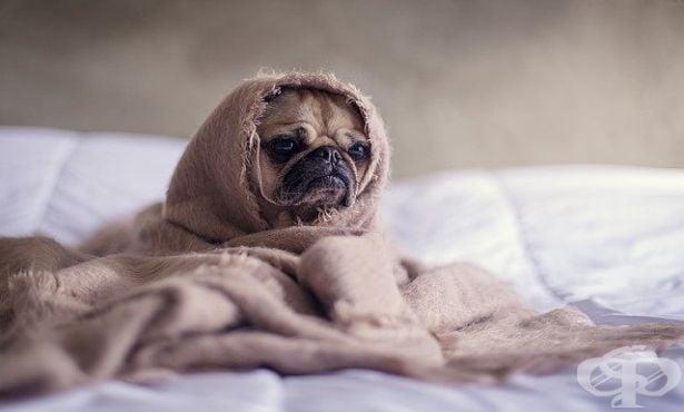 Спешна терапия при отравяне на кучето - изображение