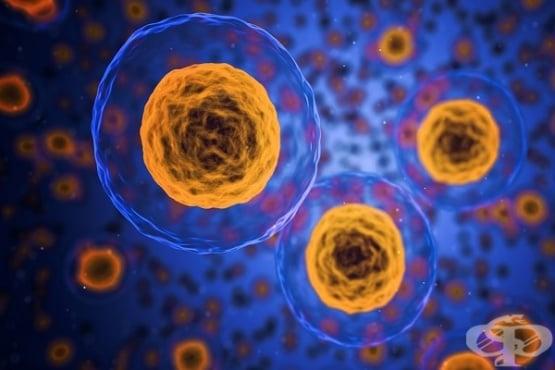 Раковите клетки хибернират, за да оцелеят по време на химиотерапия  - изображение