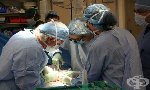 Без противогъбични медикаменти, пациентите с трансплантиран бял дроб имат по-висок риск от смърт, твърдят учени - изображение