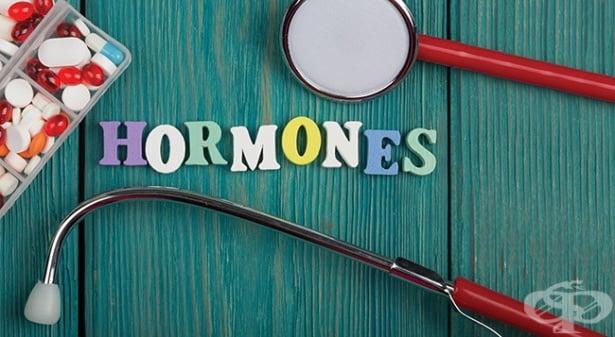 Тест: Какво знаете за хормоните? - изображение