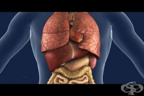 Лесен тест по анатомия: Какво знаете за вашето тяло? - изображение