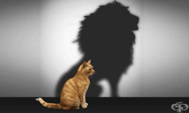 Какво е нивото на самочувствието ни наистина? - изображение