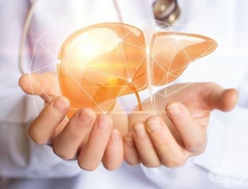Какво е състоянието на черния ви дроб в момента? - изображение