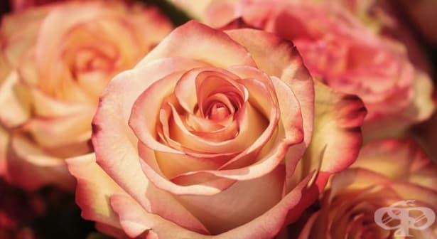 Знаете ли историята на 8 март - празникът на жената? - изображение