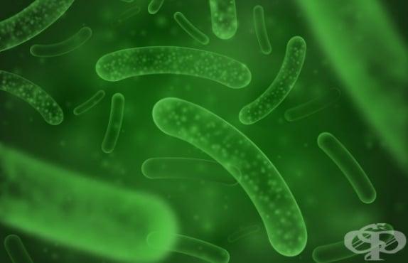 Защо са полезни пробиотиците? - изображение