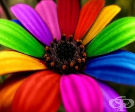 Да си направим хранителни оцветители вкъщи - изображение