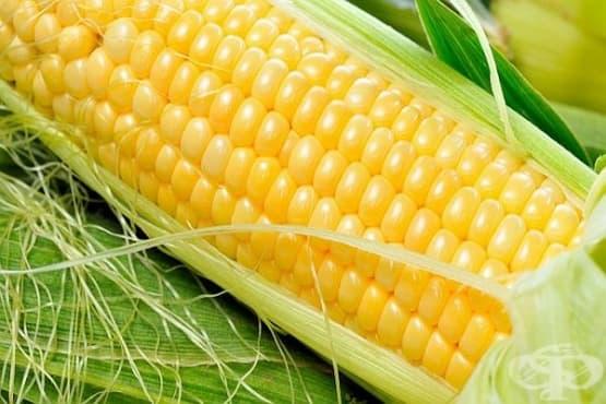 Как да изберем и приготвим вкусна царевица - изображение