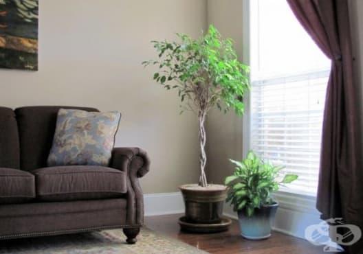Отглеждайте 10 растения, които създават перфектен микроклимат в дома /1 част/ - изображение