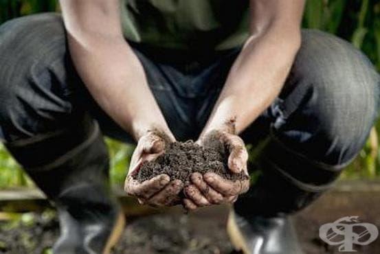 Как да тестваме нивото на pH в почвата с помощта на сода и натурален оцет? - изображение