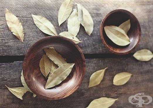 Облекчете стреса и напрежението с дафинов лист - изображение