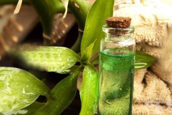 Предотвратете изпотяването и неприятната миризма с чаено дърво - изображение