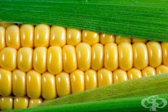 Консумацията на царевица е препоръчителна при анемия и по време на бременност - изображение