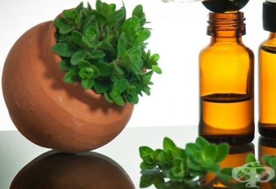 За отслабване или силен имунитет, консумирайте масло от риган   - изображение