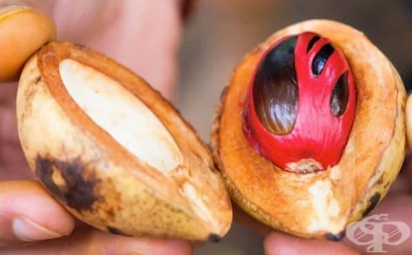 Облекчете зъбобола с индийско орехче - изображение