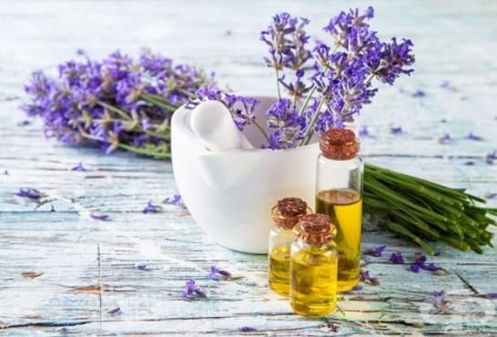 Срещу стрии се масажирайте с масло от лайка и лавандулово масло - изображение