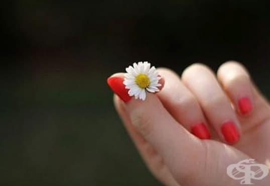Стимулирайте растежа на ноктите с масла от здравец, лавандула, лимон и жожоба - изображение