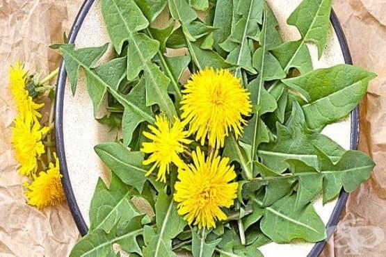 Консумирайте салата от глухарче срещу пролетна умора и авитаминоза - изображение