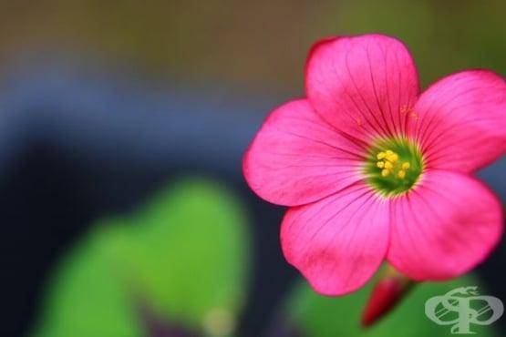 Отглеждайте 10 растения, които ще донесат любов и спокойствие в дома ви - изображение