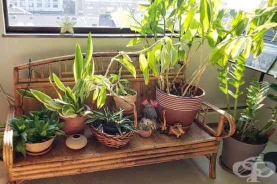 Кои 10 стайни растения да изберем, ако стаята ни е тъмна? - изображение