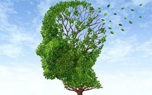 Подобрете паметта си с 5 естествени продукта - изображение