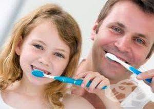 Ако детето е под две годинки, мийте зъбките му само с четка и вода - изображение