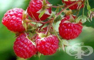 Ако имате ставни заболявания или подагра, не яжте малини - изображение