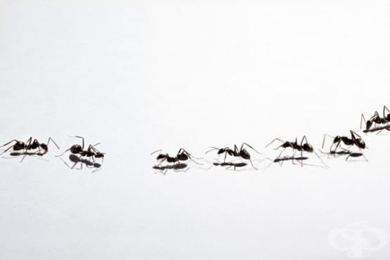 Прогонете мравките у дома по 6 начина - изображение