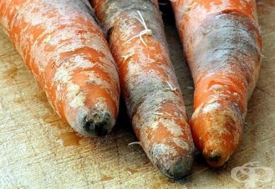 Безопасно ли е да консумираме храна, на която сме премахнали мухъла? - изображение