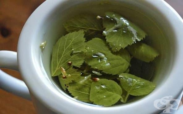 Направете си чай от бреза за укрепване на имунитета  - изображение