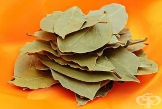 Насърчете здравето на сърцето с дафинов лист   - изображение