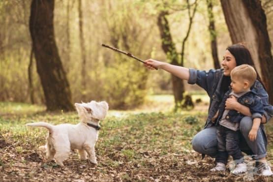 Кои 6 кучета се разбират страхотно с децата - изображение