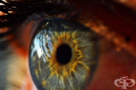 3 съвета как вашият хранителен режим може да подобри зрението ви  - изображение
