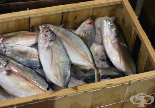 Избягвайте консумацията на тези 9 вида риби - изображение