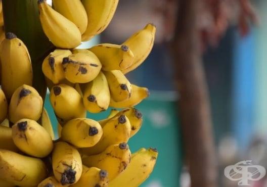Използвайте 12 практични приложения на банановата кора - изображение