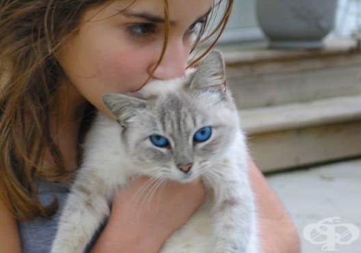 Използвайте 14 трика, които могат да улеснят живота на всеки собственик на котка - изображение