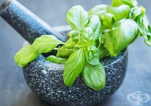 Използвайте смес от куркума и босилек срещу ужилване от насекомо - изображение
