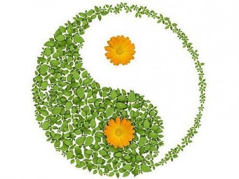 Използвайте тези 10 растения, които ще внесат позитивна енергия в дома ви - изображение
