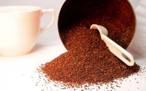 Защитете растенията от охлювите с утайка от кафе - изображение