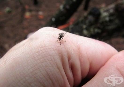 Как да идентифицираме често срещани ухапвания от насекоми - изображение