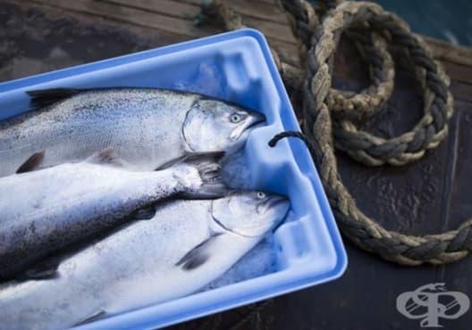 Как да изберем прясна риба? - изображение